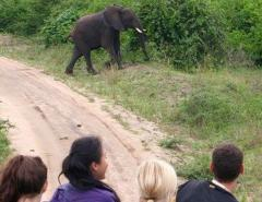 Elaine Sohng watching an elephant