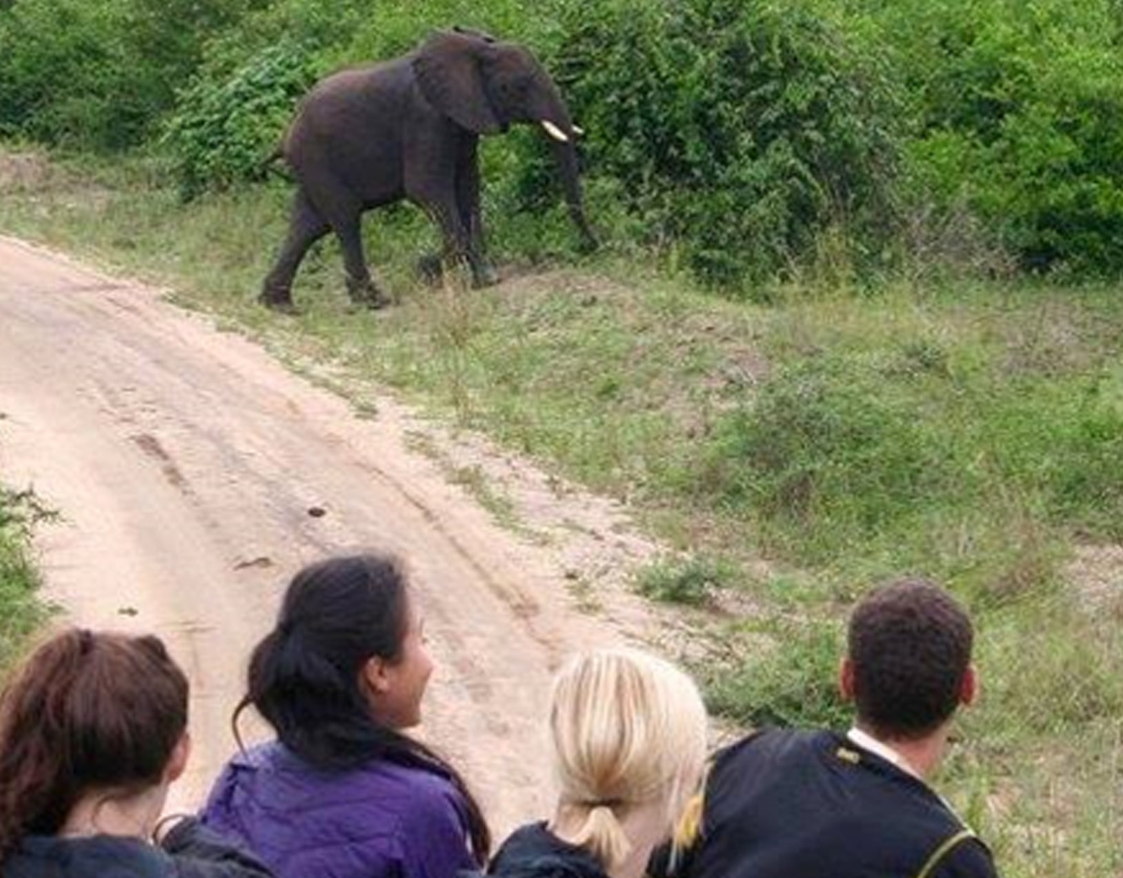 Elaine Sohng watching an elephant in Uganda