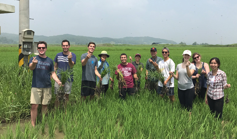 Students learning about Rice production with Professor Lee
