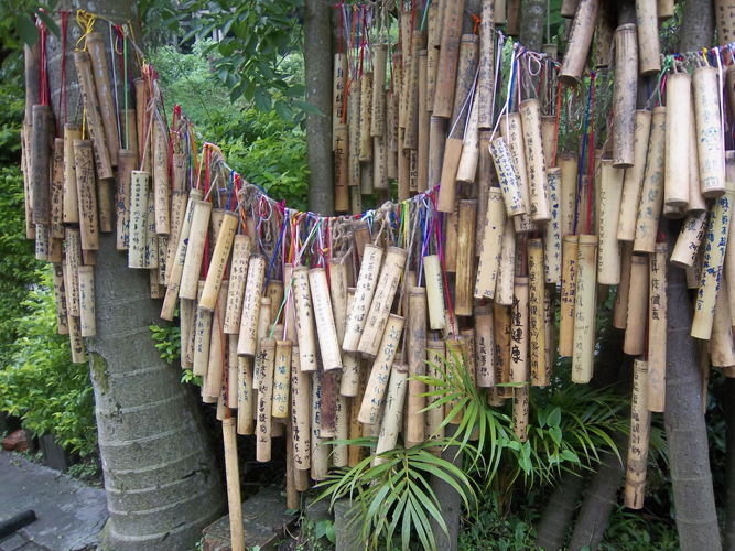 WIshes hung from a grove of palms at Pingxi